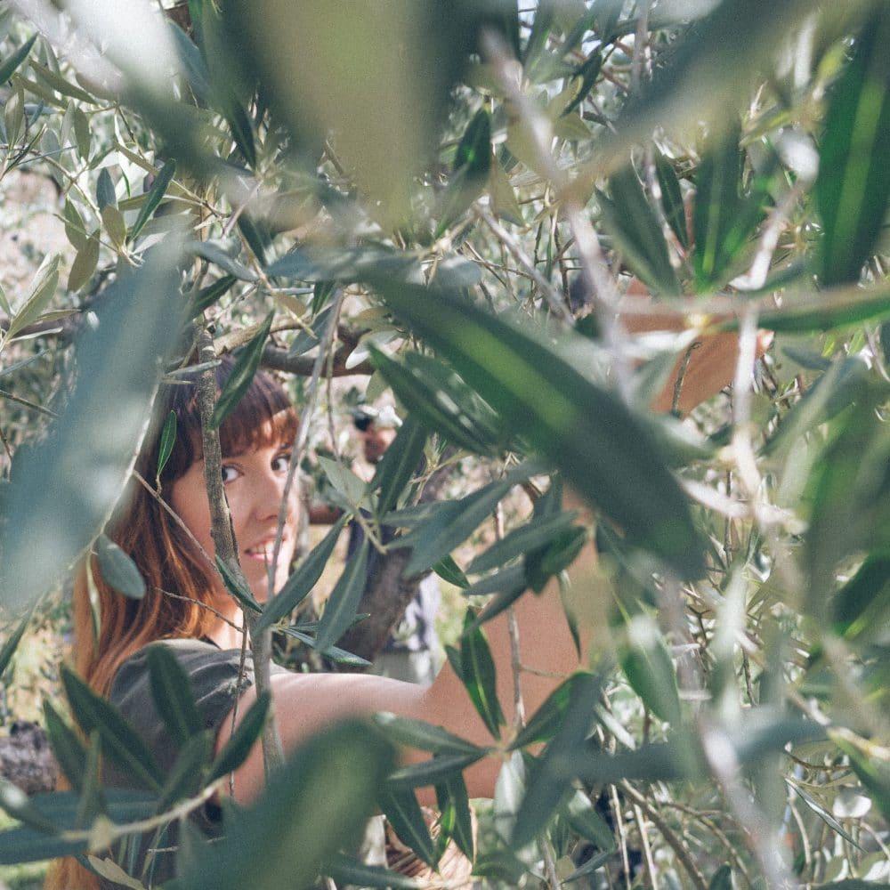 olive farm umbria
